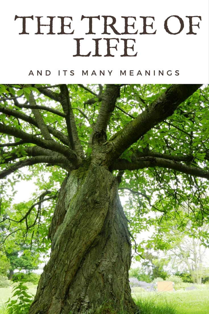 The Many Meanings Of The Tree Of Life Blarney Blog